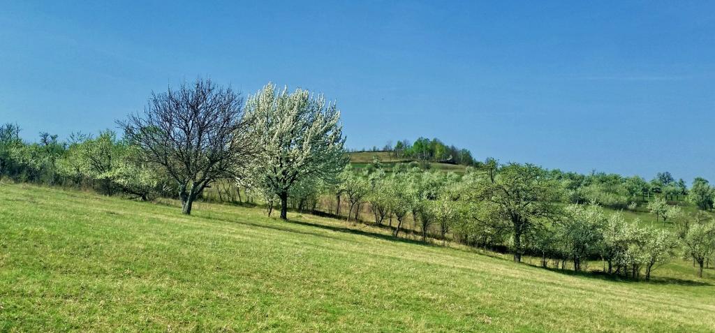 Megica-Land-of-Angels-Mehadica-Carsa-Severin-romania4
