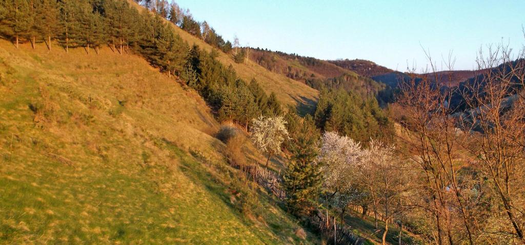 Megica-Mehadica-Carsa-Severin-romania